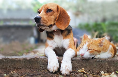 Spay and Neuter in Lake Zurich: Dog and Cat on Ledge